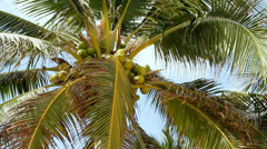 Coconut tree against the sky Stock Footage
