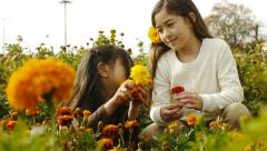 Big Sister Picks A Flower From Little Sister's Bouquet - stock footage