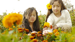 Beautiful Sisters Picking Flowers, Scattering Flower Petals Stock Footage