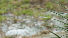 Large blades of grass pelted by rain drops with shallow puddle in the background Stock Footage