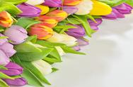 Stock Photo of colorful bouquet of spring tulips