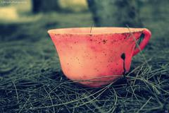 Amazing pink cup on the forest Stock Photos