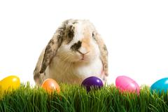 Stock Photo of easter: easter bunny sitting in grass with plastic easter eggs