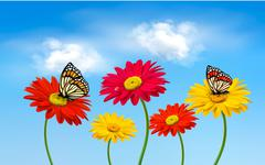 nature spring gerber flowers with butterflies  vector illustration. - stock illustration