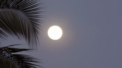Evening moon behind  the coconut  tree branch - stock footage