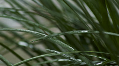 Large blades of grass pelted by rain drops during a summer storm. Stock Footage