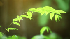Stock Video Footage of Tropical Plant in the Jungle.