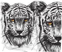 Luonnos valkoinen tiikeri Piirros