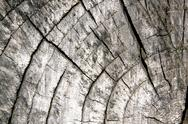 Stock Photo of old sawed off tree trunk showing age rings