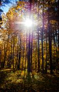 picturesque autumn forest illuminated by the morning sun. sigulda, latvia - stock photo