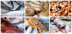 Collage of raw seafood Stock Photos