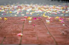 Rose petals on asphalt after wedding ceremony Stock Photos