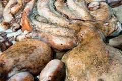 Octopus close-up Stock Photos