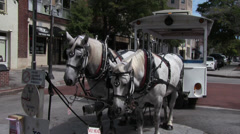White Trolley Horses Stock Footage