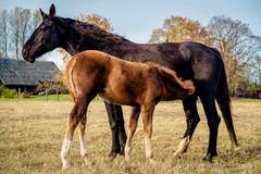 Two horses outdoors Stock Photos