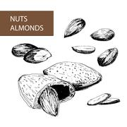 Nuts. Almonds - stock illustration