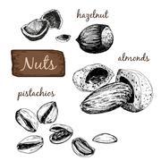 Nuts. Set of illustrations. - stock illustration