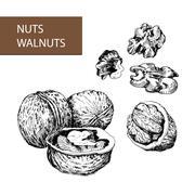 Nuts. Walnuts. Stock Illustration