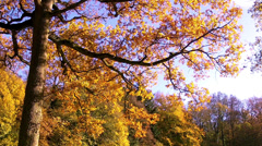Autumn forest in Abbaye de Maredsous. Stock Footage