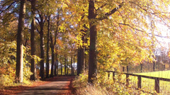 Autumn road  in Abbaye de Maredsous. Stock Footage