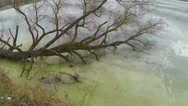 Stock Video Footage of winter frozen lake with  fallen tree. Aerial.