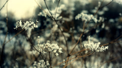 The white frost on the pedicles Stock Footage