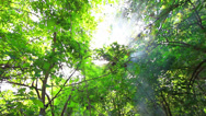 Stock Video Footage of Tropical forest