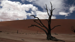 Namibia Sossusvlei tree Stock Footage