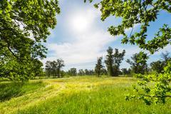 Summer grassland Stock Photos