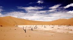 namibia Sossusvlei trees - stock footage