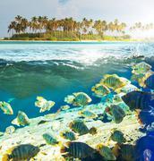 fish underwater - stock photo