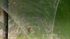 Spider kiinni lentää suppilo web Arkistovideo