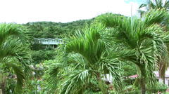 British Virgin Islands Tortola Road Town 021 a row of palm trees Stock Footage
