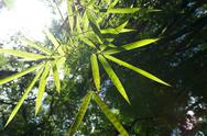 Stock Photo of bamboo leaves with sun