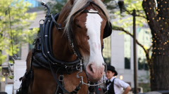 Carriage Horse portrait, Carriage Driver Stock Footage