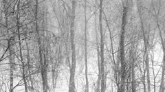 Forest trees covered with new falling snow Stock Footage