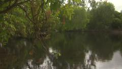 River with Branches Stock Footage