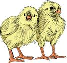 Stock Illustration of hand draw sketch of chicken