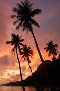 tropical beach with palm trees at sunrise, ang thong national marine park, th - stock photo