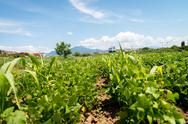 Stock Photo of agriculture vegetable garden