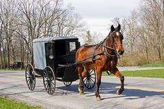 Amish horse and carriage Stock Photos