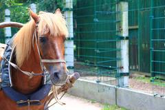 Stock Photo of Horse