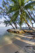 Rum Point Palm Tree - stock photo
