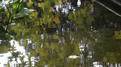 Reflection of leaves in water in autumn Stock Footage