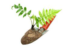 gardening trowel and plant on a isolate. - stock photo