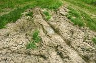 Stock Photo of dried soil and green grass