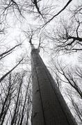 view from the bottom up to the designs of the branches of trees with no leave - stock photo
