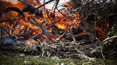 Burning branches in the field Stock Footage