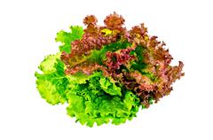 Lettuce green and red Stock Photos