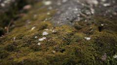 Moss covered wet rocks Stock Footage